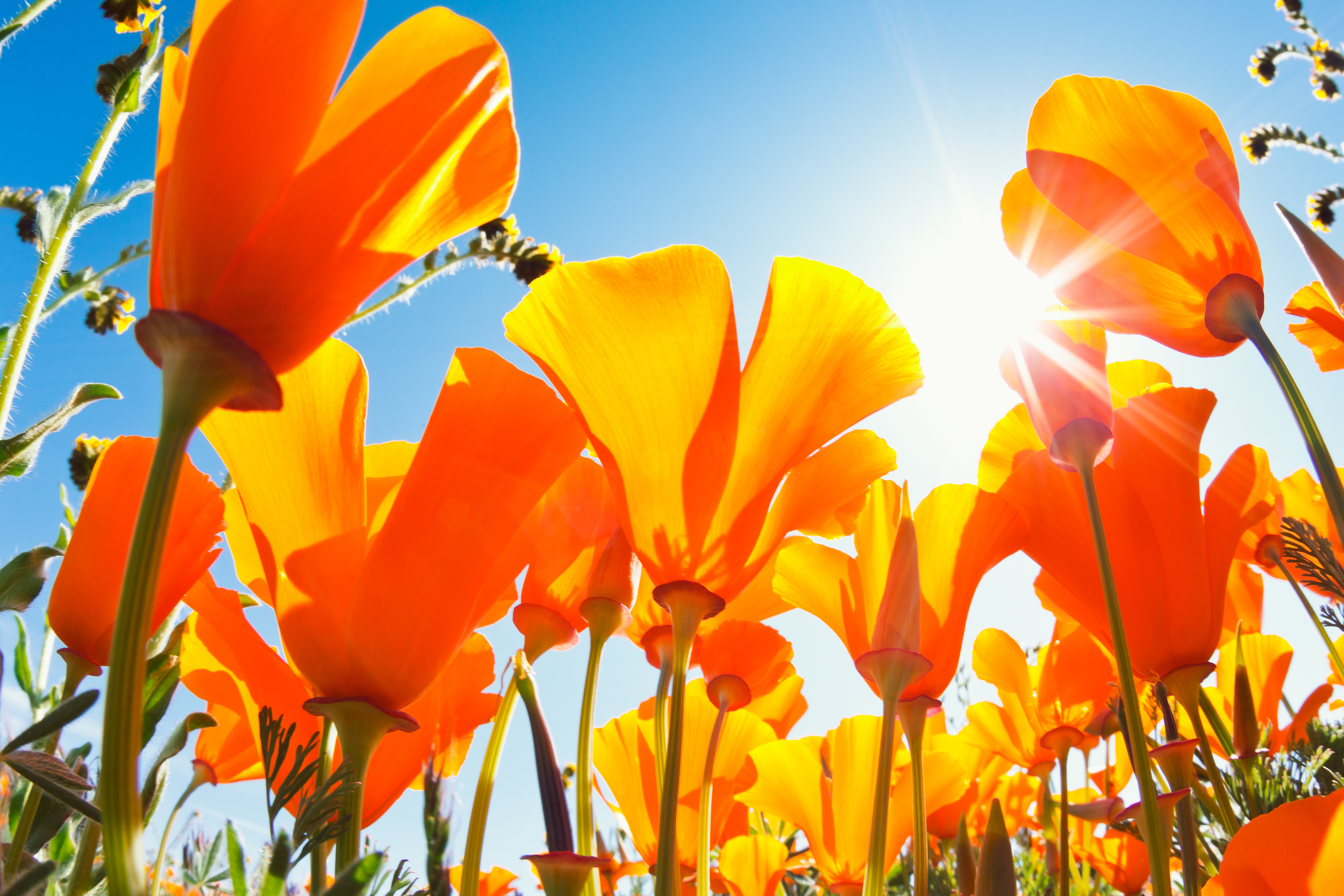 May Day 2015 Quotes 10 Inspirational Sayings To Welcome New Month