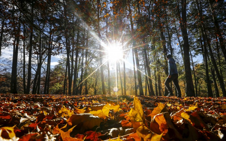 First Day Of Fall Quotes: 14 Excerpts About Autumn From Your ...