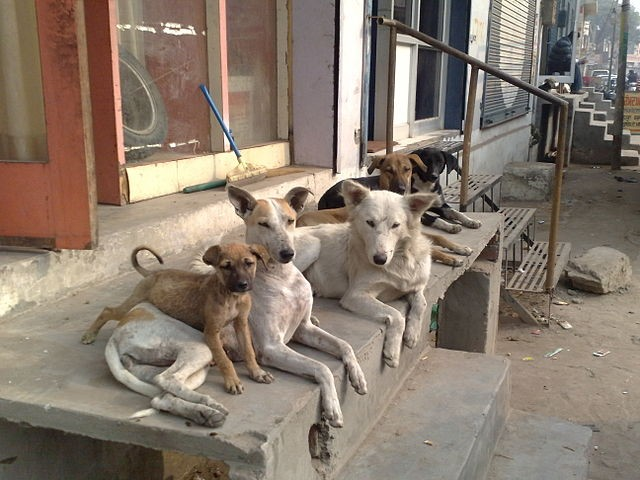 A pack of strays