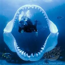Megalodon shark pictures see real pics of the monster shark photos megalodon altavistaventures Image collections