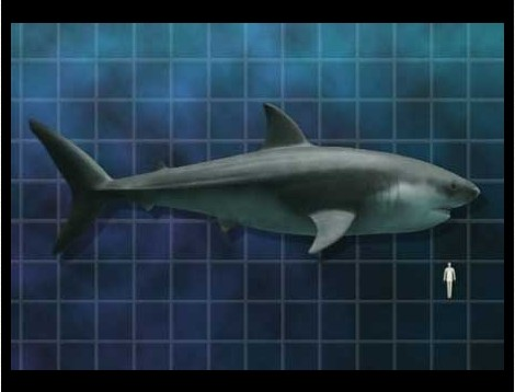 Megalodon Shark Pictures: See Real Pics Of The Monster Shark