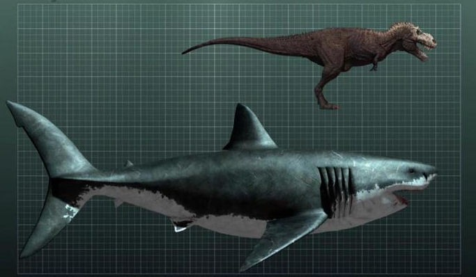 Megalodon Shark Pictures: See Real Pics Of The Monster Shark! [PHOTOS]