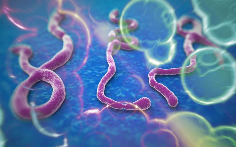Is Ebola Virus In On Verge Of Outbreak In The USA?