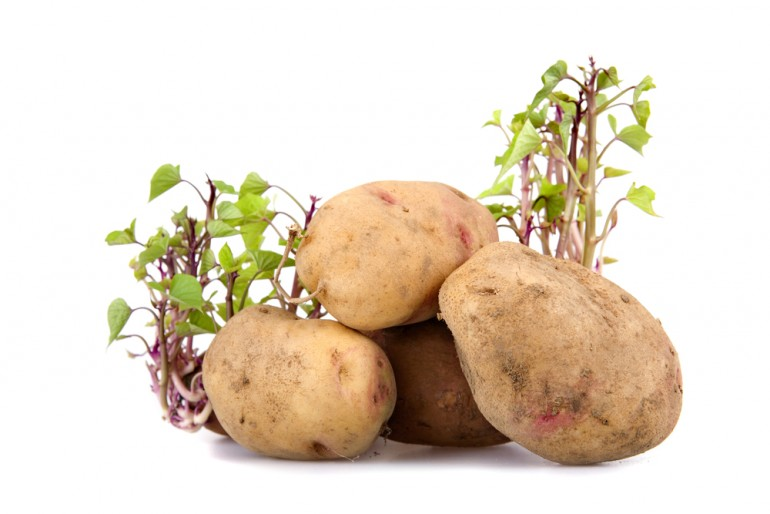 Colombian-Woman-Potato-Contraceptive-Vagina-Roots-Growing