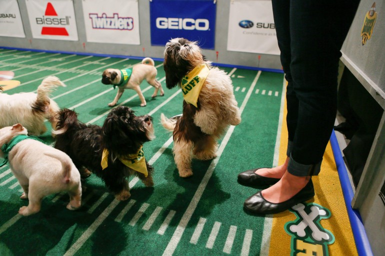 puppy-bowl11-behind-the-scenes-09