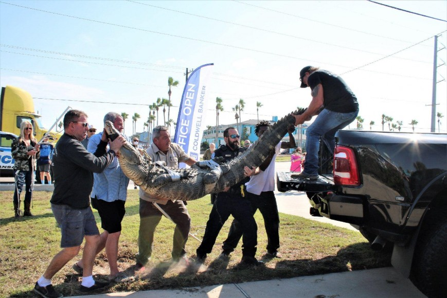 The 'Dollar Store Gator' Was Getting Too Comfortable Around Humans For Its Own Good