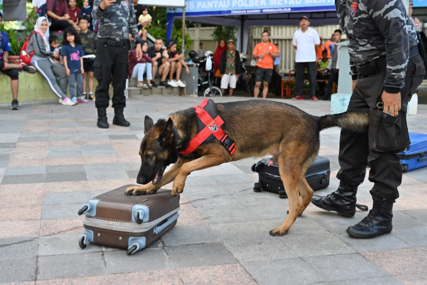 Jimmy, an Indonesian police K-9 squad working dog, sniffs suitcases for narcotics during an anti-drug drill in Jakarta