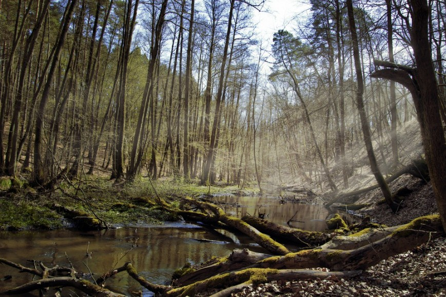 forest-5045662_960_720