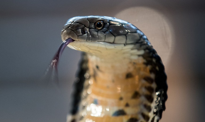 Deadly Reptiles Go On Show At Children's Zoo