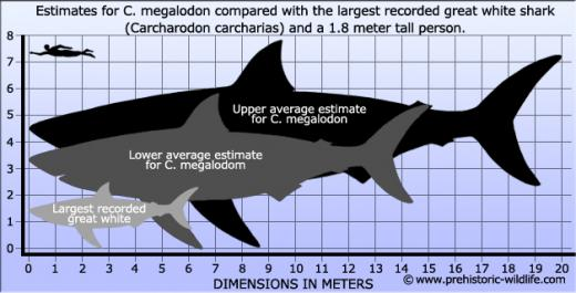 Megalodon Vs  Great Wh...