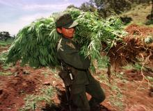 Destroying marijuana plants in Mexico.