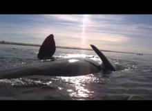 Don't Get Too Close! Whale In Argentina Gently Lifts Kayakers Out Of Water