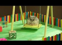 This Tiny Hamster In A Tiny Playground Is The Cutest Thing You'll See Today!