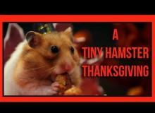 This Hamster Had The Best Thanksgiving Ever!